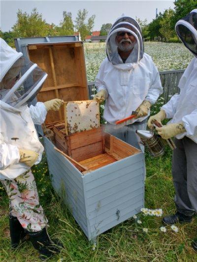 Honninghøst i bigården